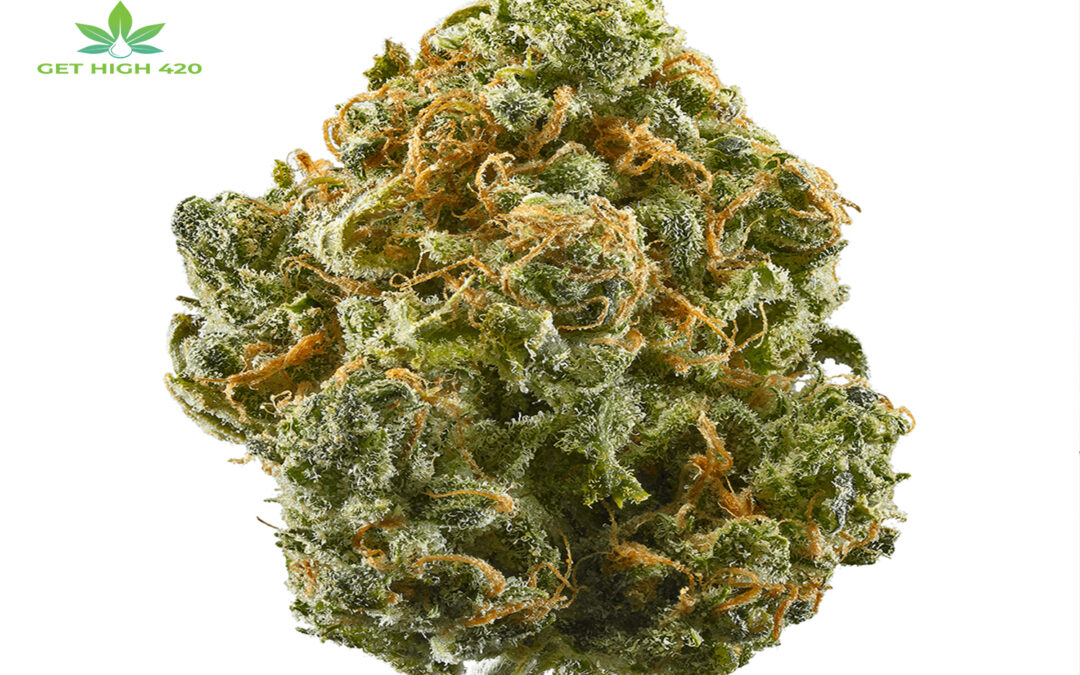 Indica Dominant Hybrid Strains: Top 10 Strains & Their Features